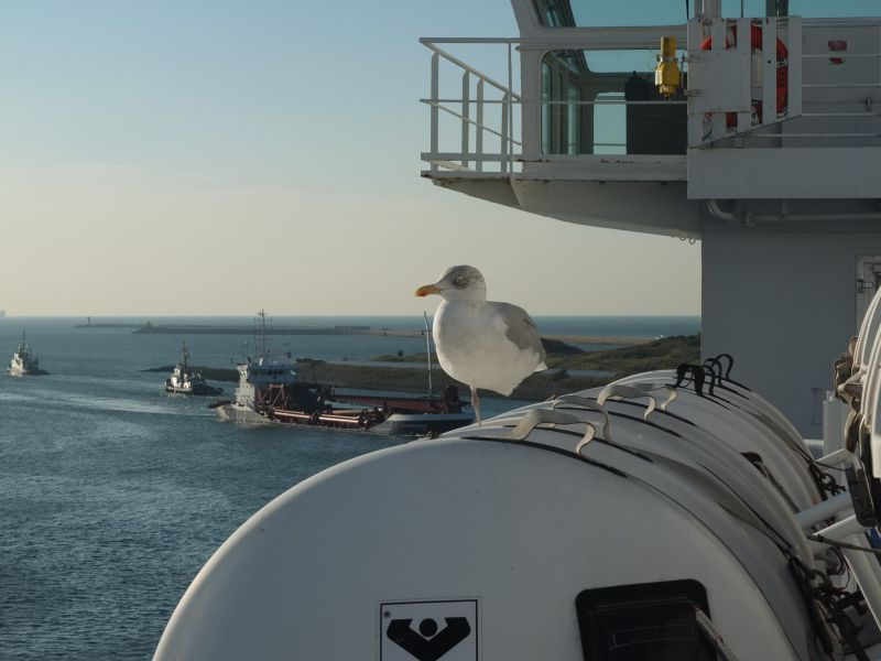 DFDS Seawys im Hafen Amsterdam