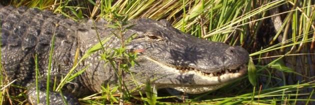 Foto der Woche – Everglades, Florida